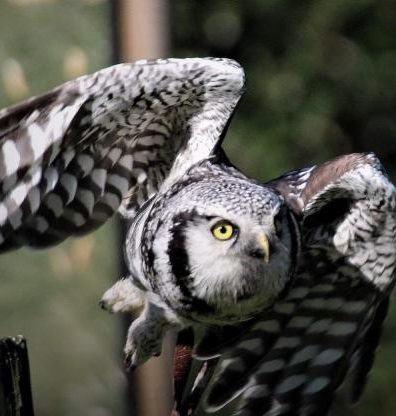 Machynlleth's Falconry Experience Wales nets Hospitality Award